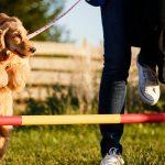 12 ترفند ساده برای آموزش سگ
