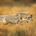 عکاسی از حیات وحش | 9 نکته برای گرفتن عکاسی بهتر از حیات وحش