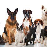 نحوه انتخاب سگ مناسب   6 فاکتور که باید در نظر بگیرید