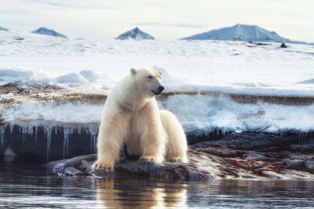 حفاظت محیط زیست