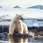 حفاظت محیط زیست | 5 نمونه از حفاظت از طبیعت