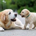 چگونه سگ خود را از جویدن ناخواسته متوقف کنیم