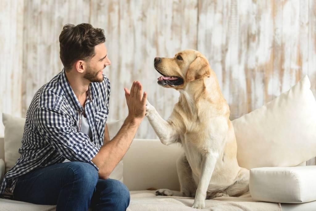 نحوه انتخاب سگ