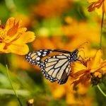نحوه عکاسی از پروانه ها