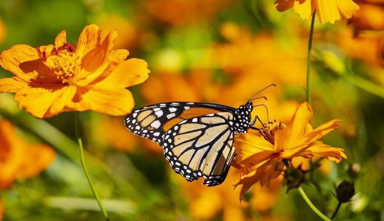 عکاسی از پروانه ها